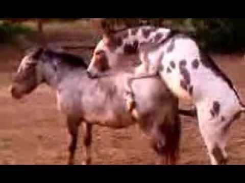 Секс лоошшадей смотреть видео фото 46-998